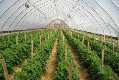 روشهای رطوبت سنجی در گلخانه ها